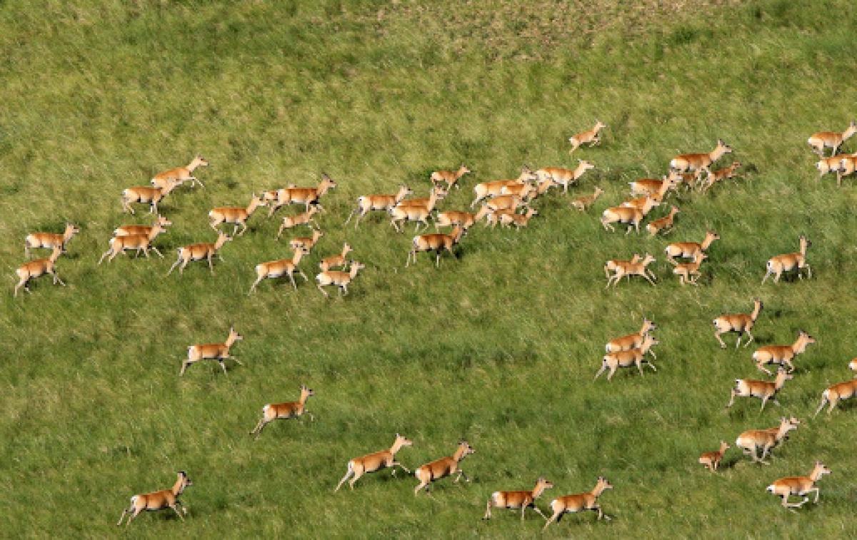 Тосон-Хулстайн байгалийн нөөц газар ЮНЕСКО-д бүртгэгдлээ